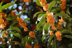 orange_flowers.jpg
